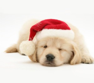 Cute-Christmas-Dog-Wallpaper-4